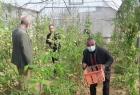 الإغاثة الزراعية تعقد ورشة عرض نتائج حول تجربة المبيد الحيوي في مكافحة أمراض التربة