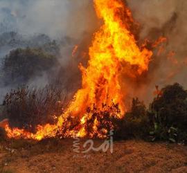 كارثة تهدد السياح في مرمريس نتيجة اتساع نطاق حرائق الغابات في تركيا.. فيديو